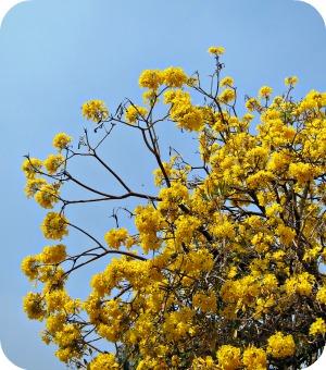 Bangalore, the Garden City of India